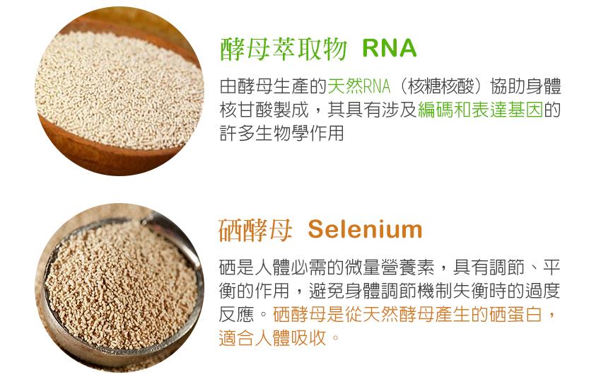 酵母萃取物,RNA,酵母,天然,編碼和表達基因,硒酵母,Selenium營養素,調節,平衡,適合人體吸收